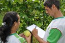 Agroecologia - TCC