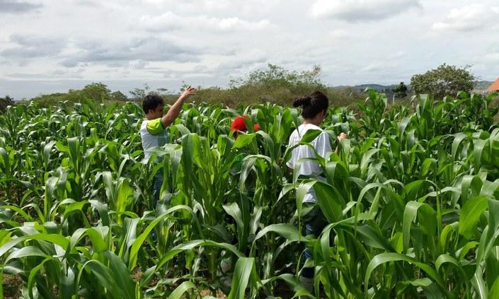 IFPE Vitória tem projeto selecionado em edital nacional do AgroResidência